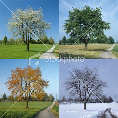 ist2_7235396-four-season